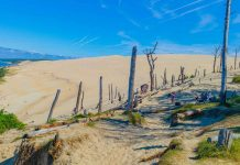 Things-to-Do-in-The-Guadalupe-Nipomo-Dunes-State-Park-on-thestuffofsuccess
