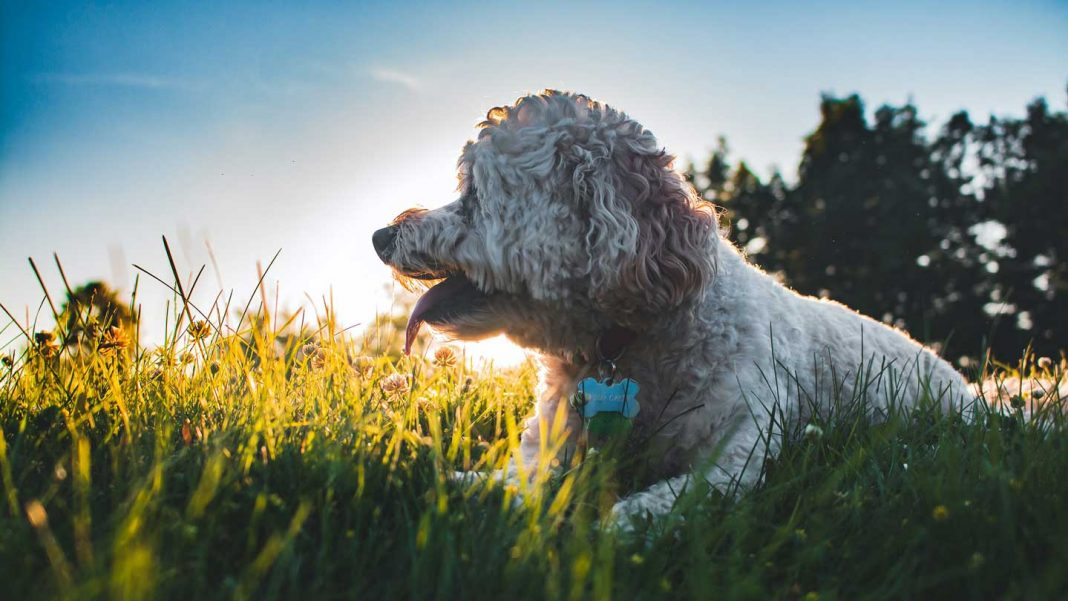 What-You-Should-Know-About-Dog-Flea-&-Tick-on-thestuffofsuccess