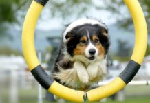 Know-About-Dog-Training-on-TheStuffofSuccess
